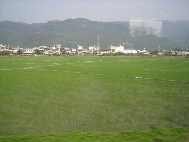 Taiwan Rice Paddies