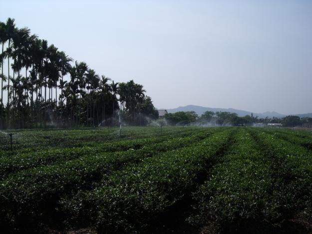 Taiwan Tea Farm